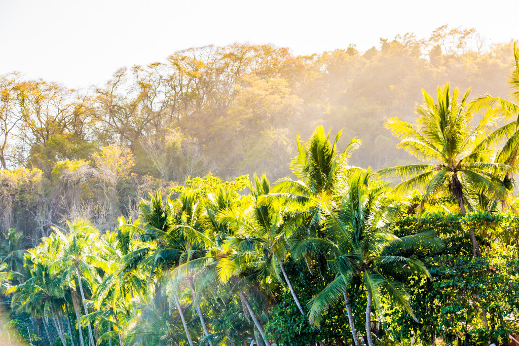 The sunlight hitting the rainforest canopy creating a magnificent spectacle