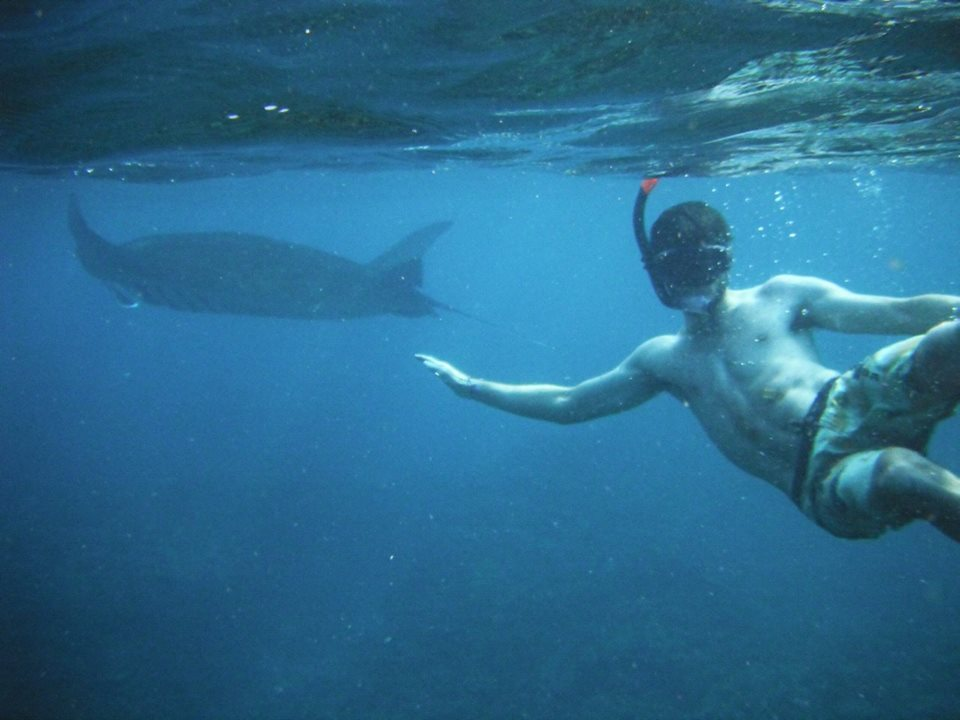 swim-the-stingrays-on-your-gap-year